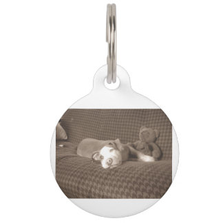 American_Pit_Bull_Terrier_and_teddy_bear_on_couch. Pet ID Tag