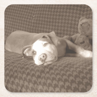 American_Pit_Bull_Terrier_and_teddy_bear_on_couch. Square Paper Coaster