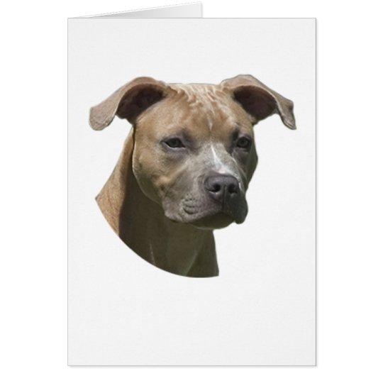 American Pit Bull Terrier (APBT) Card
