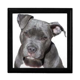 American Pit Bull Terrier Gift Box