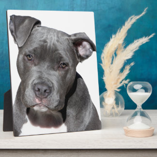 American Pit Bull Terrier Plaque