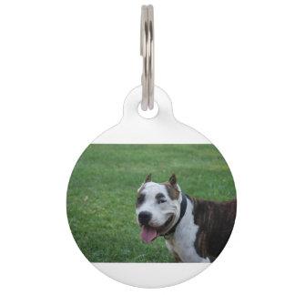 american pit bull terrier smiling pet name tag