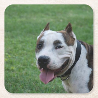 american pit bull terrier smiling square paper coaster