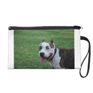 american pit bull terrier smiling wristlet