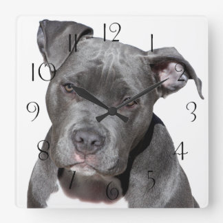 American Pit Bull Terrier Square Wall Clock