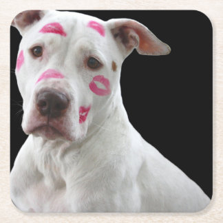 american pit bull terrier with kisses square paper coaster