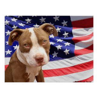 American Pitbull puppy Poster