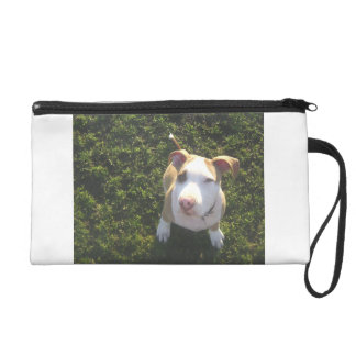 american PitBull terrier Looking Up Wristlet