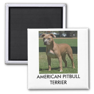 American Pitbull Terrier Magnet
