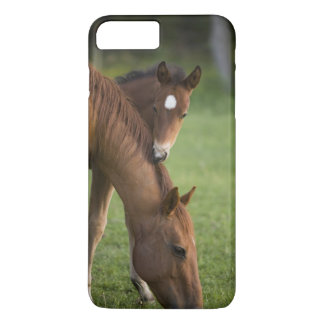 American Quarter horse mare and colt in field at iPhone 7 Plus Case