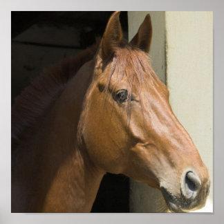 American Quarter Horse Photo Print