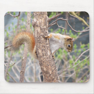 American Red Squirrel Mouse Pad