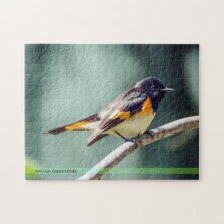 American Redstart Bird Puzzle
