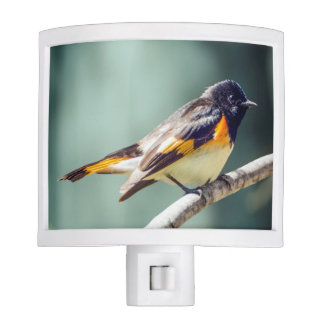 American Redstart Night Light