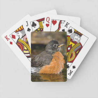 American Robin bathing 2 Playing Cards