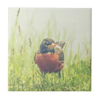 American Robin Bird Ceramic Tile