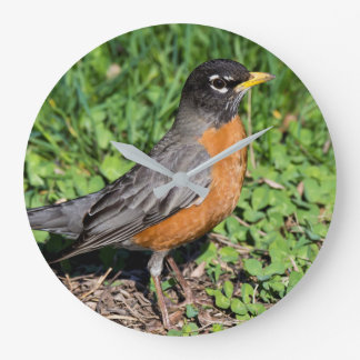 American Robin in the Grass Clock