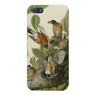 American Robin iPhone 5 Case