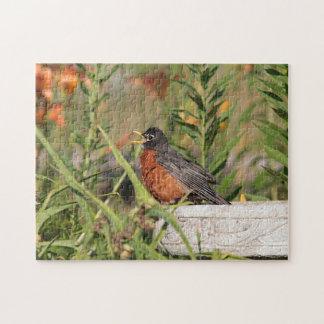American robin jigsaw puzzle