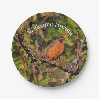American robin paper plate