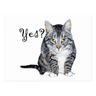 American Shorthair Cat - Yes? Postcard