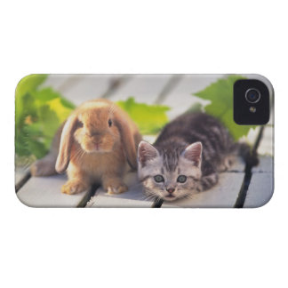 American Shorthair; is the most popular and most iPhone 4 Cases