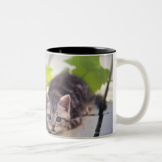 American Shorthair; is the most popular and most Two-Tone Coffee Mug