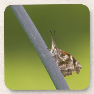 American Snout Butterfly on Green Background Beverage Coaster