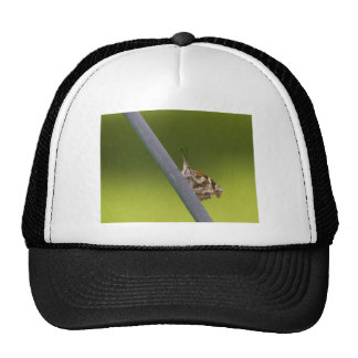 American Snout Butterfly on Green Background Hats