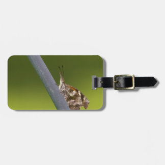 American Snout Butterfly on Green Background Travel Bag Tag