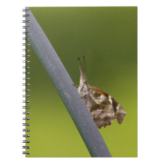 American Snout Butterfly on Green Background Spiral Notebook