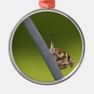 American Snout Butterfly on Green Background Silver-Colored Round Ornament
