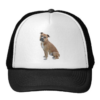 American Staffordshire Terrier (A) - Brown-white Trucker Hat