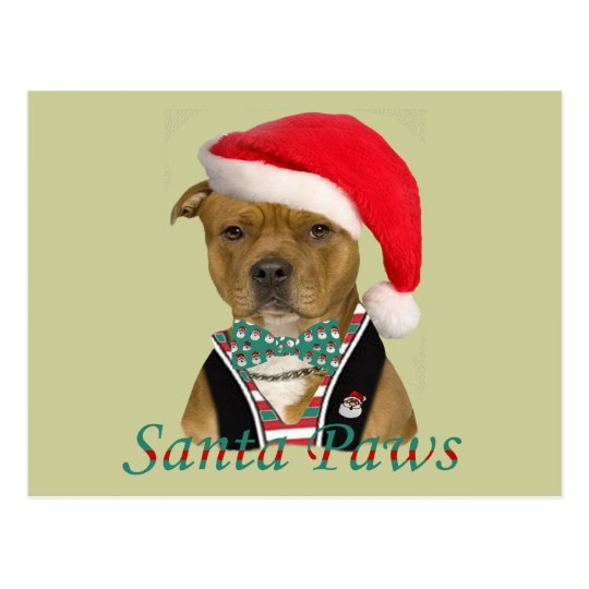 American Staffordshire Terrier A Christmas Design Postcard