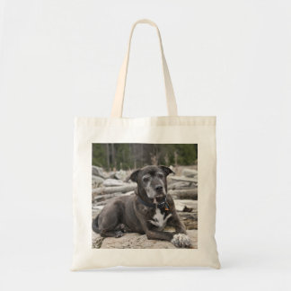 American Staffordshire Terrier - Bag