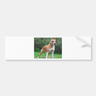 American Staffordshire Terrier Dog Bumper Sticker