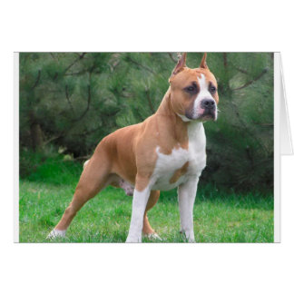 American Staffordshire Terrier Dog Card