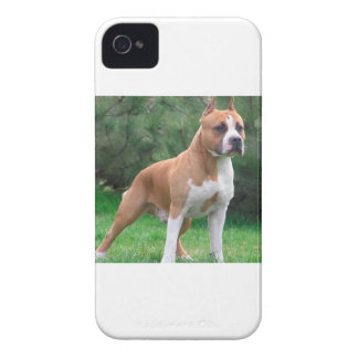 American Staffordshire Terrier Dog iPhone 4 Cover