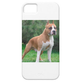 American Staffordshire Terrier Dog iPhone 5 Case