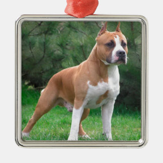 American Staffordshire Terrier Dog Silver-Colored Square Ornament