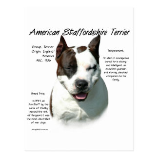 American Staffordshire Terrier History Design Postcard