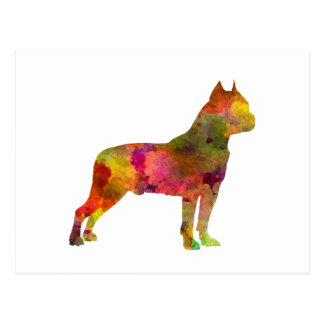 American Staffordshire Terrier in watercolor 2 Postcard