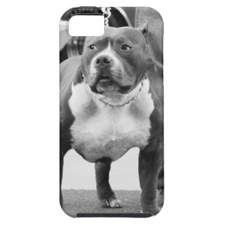 American Staffordshire terrier iPhone 5 Case