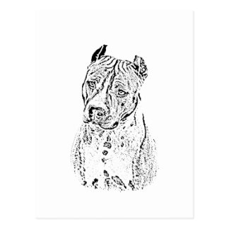 American Staffordshire Terrier Postcard