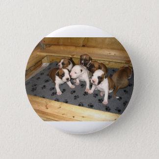 American Staffordshire Terrier Puppies Dog 2 Inch Round Button
