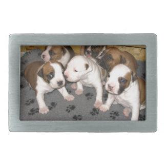 American Staffordshire Terrier Puppies Dog Belt Buckles