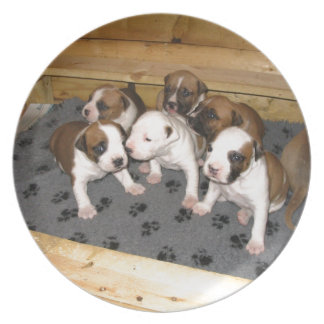 American Staffordshire Terrier Puppies Dog Dinner Plates