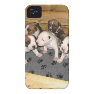 American Staffordshire Terrier Puppies Dog iPhone 4 Cover