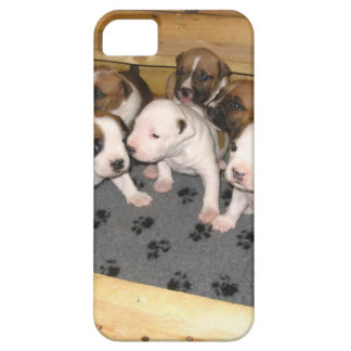 American Staffordshire Terrier Puppies Dog iPhone 5 Cover