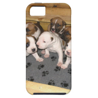 American Staffordshire Terrier Puppies Dog iPhone 5 Covers